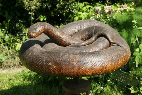 Huge coiled taxidermy Snake