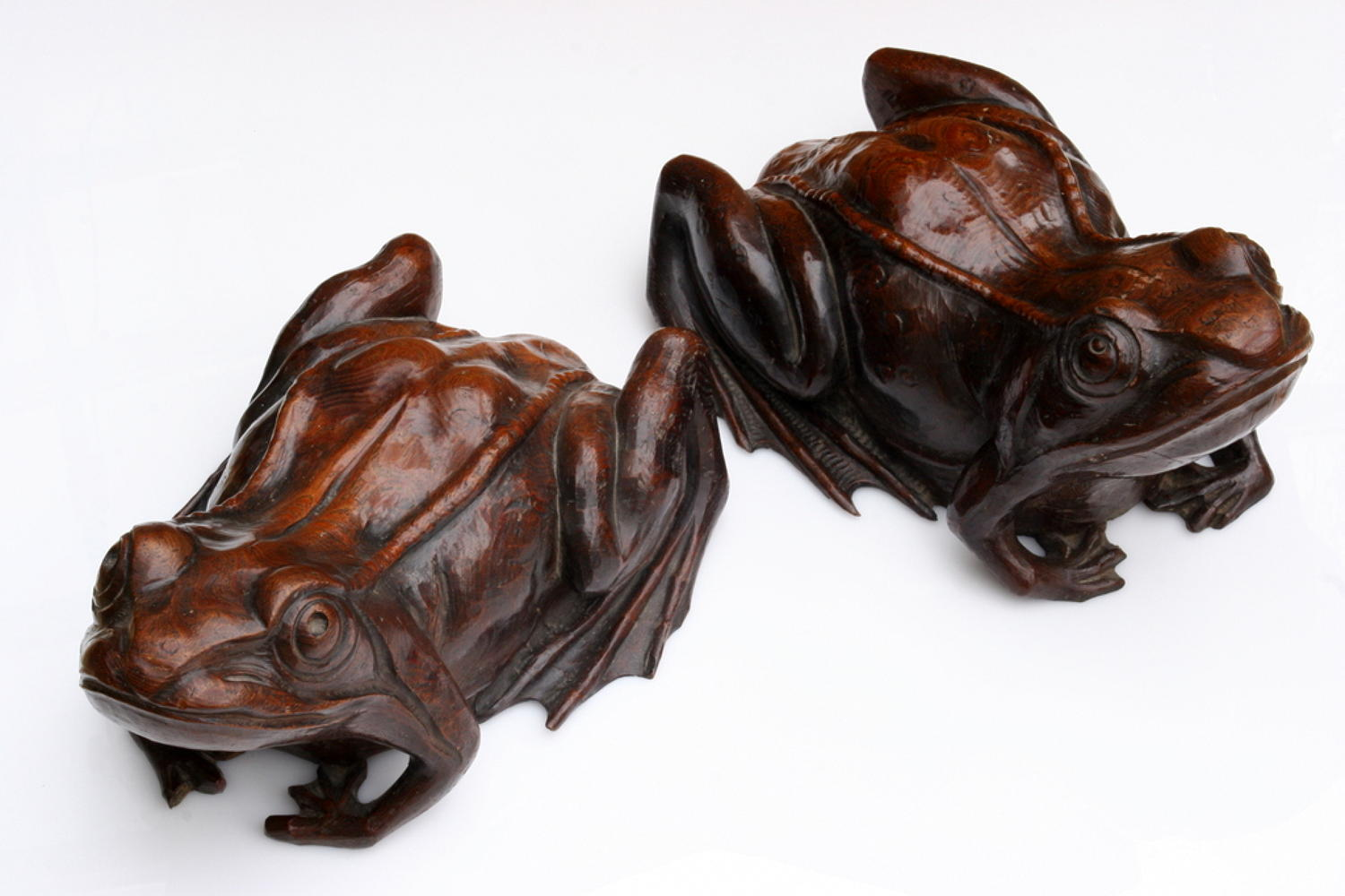 Extraordinarily Large Elm 19th century Frogs