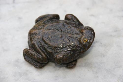 Frog Snuff Box Paper Mache 19th century
