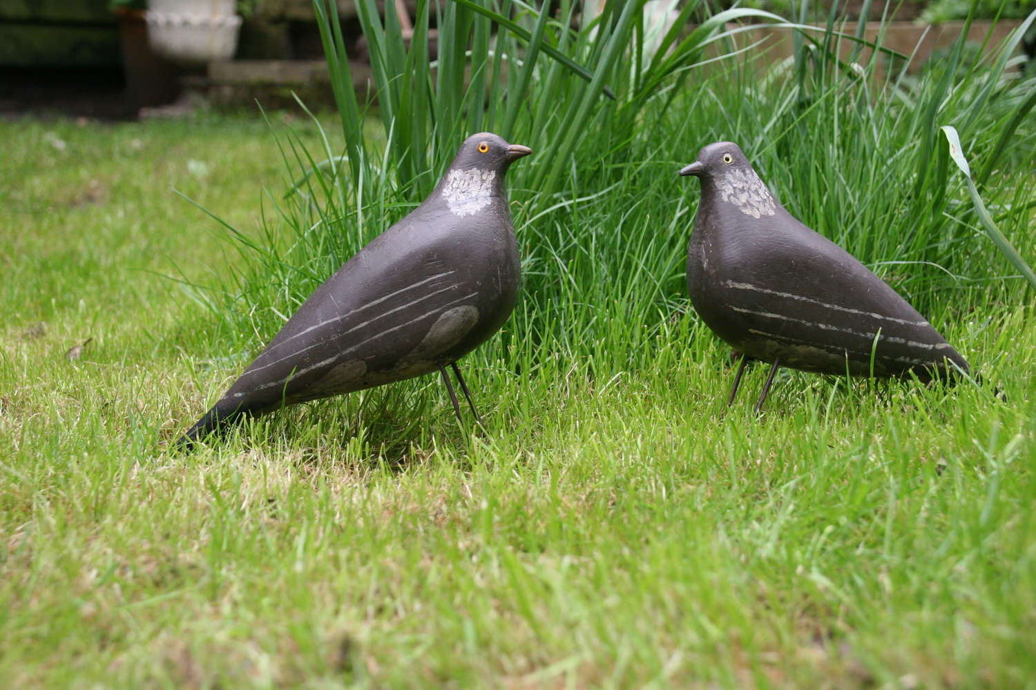 2x English painted wooden Pigeon Decoys, c.1910