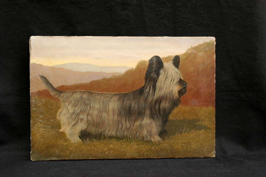 Skye Terrier Portrait, Oil on Canvas, late 19th / early 20th